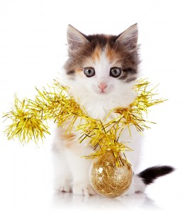 bigstock-Kitten-With-A-Festive-Garland--50267561