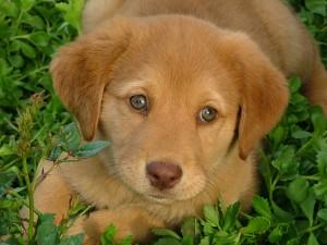 bigstockphoto_My_Puppy_1819280