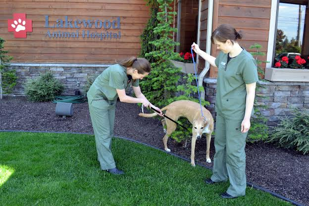 The easy new way to get a urine sample from a dog - Dr. Marty Becker