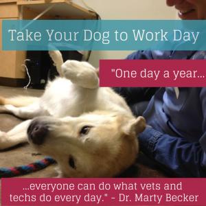 Take Dog to work day