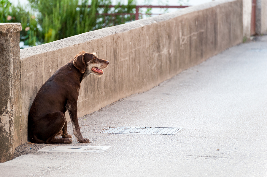 Don't 'Ace' the Fear: Why acepromazine may make your dog's