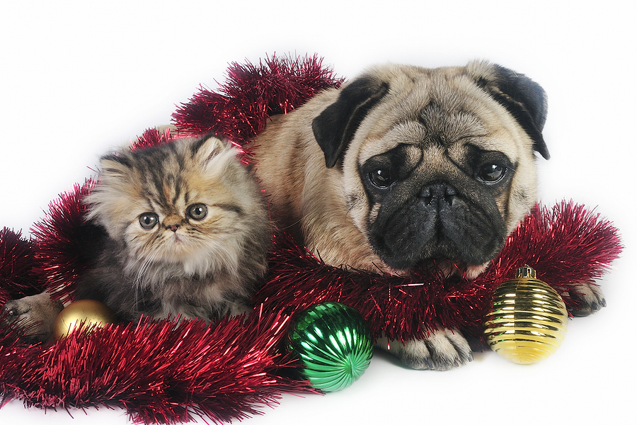 lessons from a puppy who swallowed a string of christmas lights dr