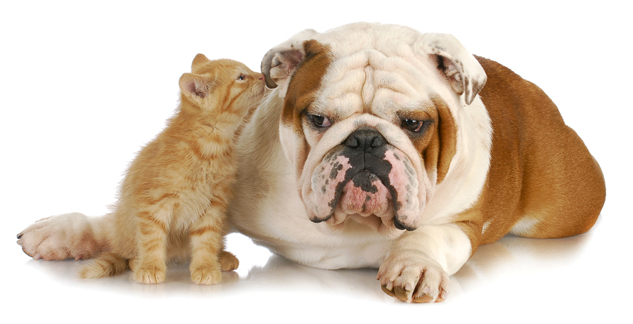 Do dogs as well as cats get ear mites? You bet! Here's a reader's ... Ear Mites In Cats