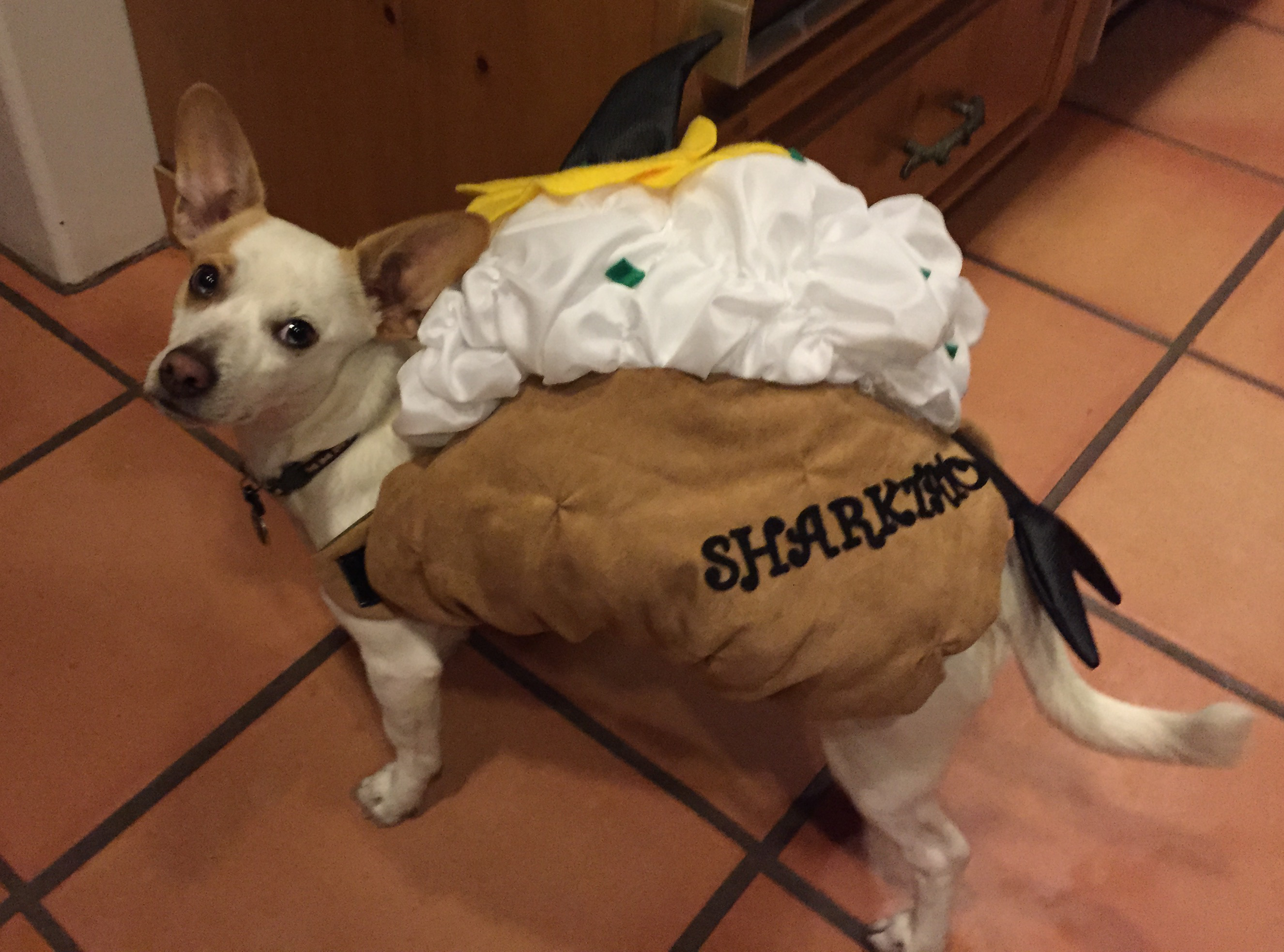 & The pros and cons of pet Halloween costumes - Dr. Marty Becker