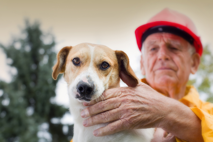 Old man rescuing dog from natural disaster ** Note: Shallow depth of field