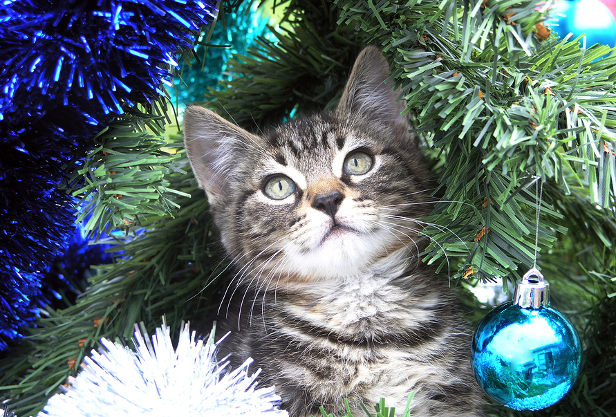 A Kitten playing in a Christmas tree ** Note: Slight graininess, best at smaller sizes