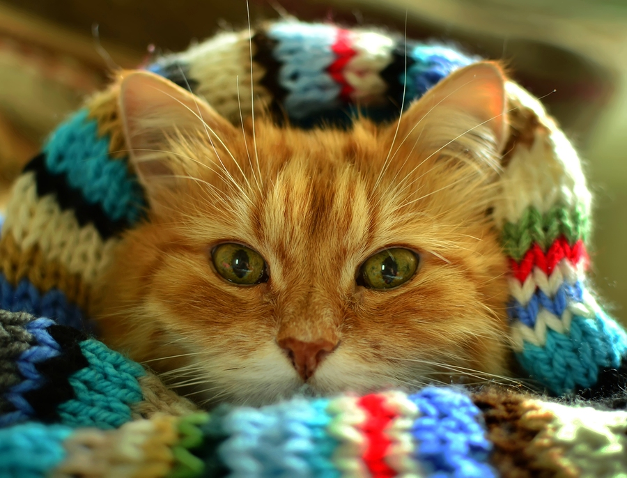 Funny red cat in cozy home atmosphere. ** Note: Shallow depth of field