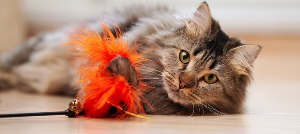 Fluffy Cat Plays With A Toy.