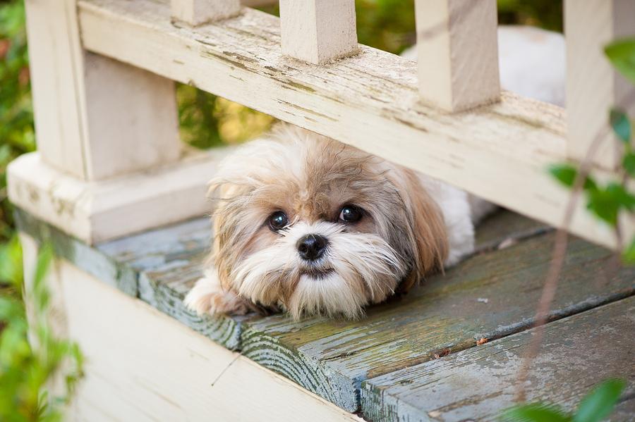 cute puppy dog peeking under railing on porch
