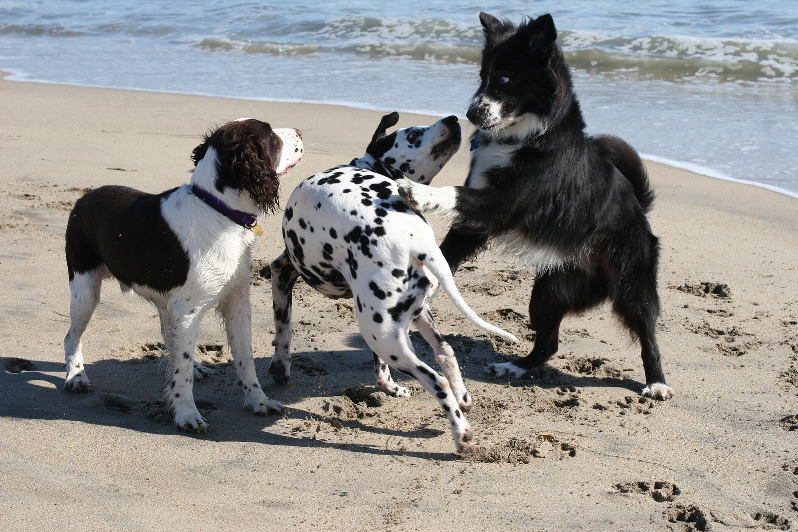 bigstockphoto__dogs_playing_183968-from-dell-2016