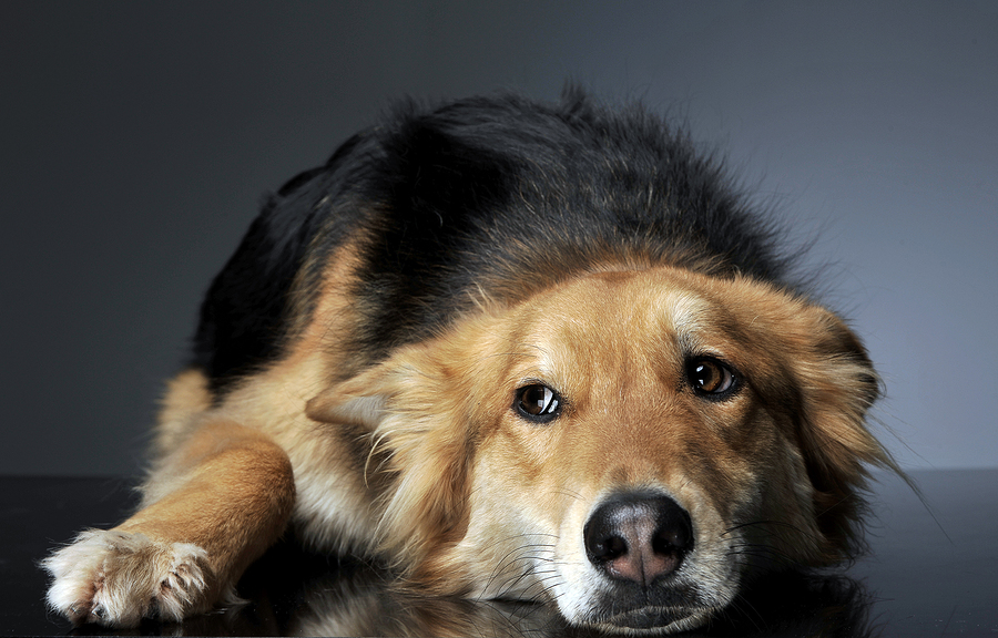 Can you share your Xanax with your dog? - Dr  Marty Becker