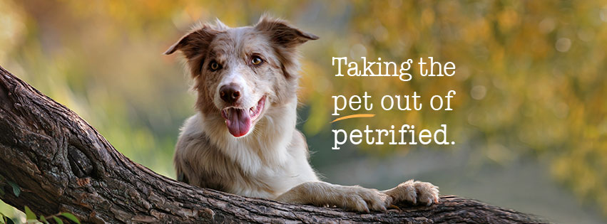 toefl treating pets like family members Essay topics: pets should be treated like family membersdo u agree or disagree with the statementexplain reasons and y.