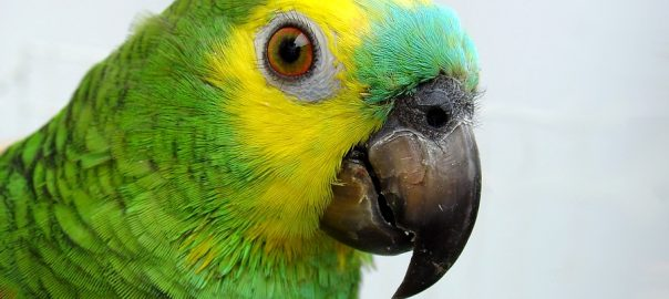 What You Need To Know About Your Parrot S Diarrhea Dr
