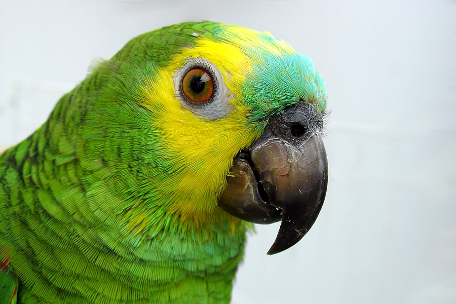 What you need to know about your parrot's diarrhea - Dr