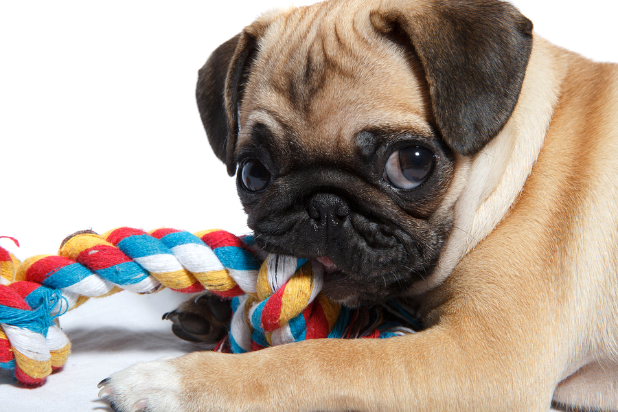 Toys For Biting : The search for perfect dog chew toy dr marty becker