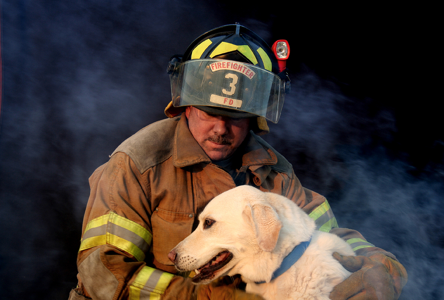 firefighter with labrador retriever