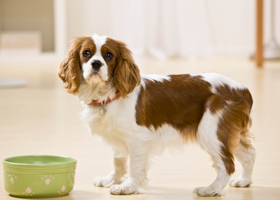 Dog looking at camera standing by green bowl