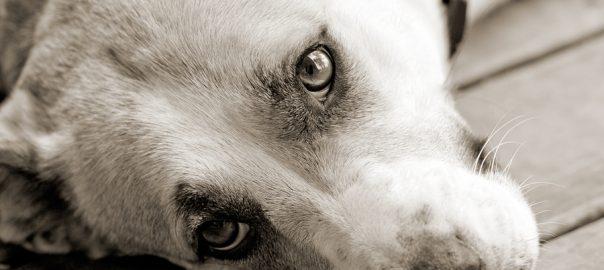 Sweet sad dog