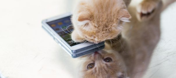 kitten with smartphone