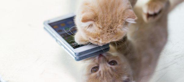 kitten with smartphone