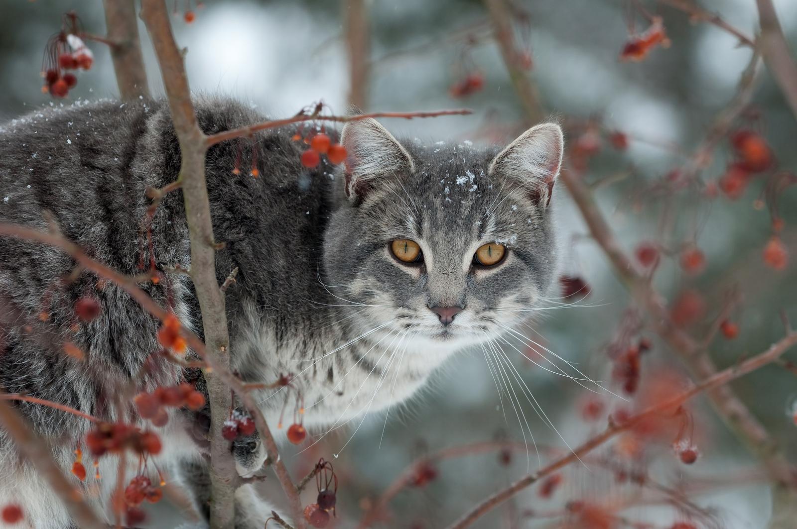 cat in winter