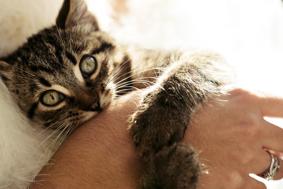 Cat biting hand