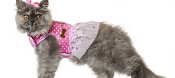 Cat in pink dress and hair bow in front of white