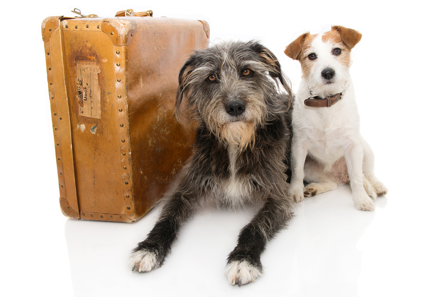 JACK RUSSELL AND SHEEPDOG NEXT TO A VINTAGE SUITCASE. ISOLATED AGAINST WHITE BACKGROUND.
