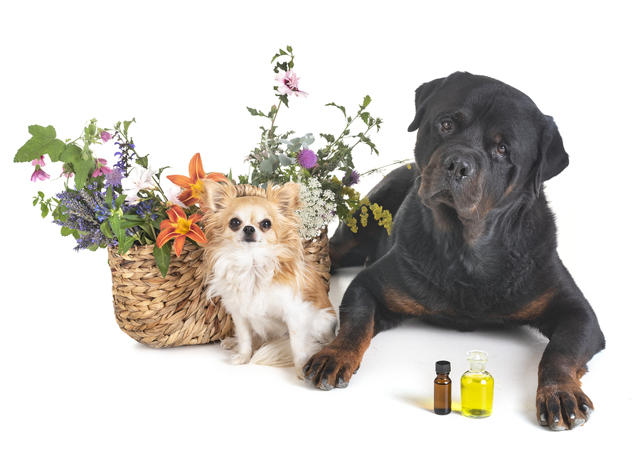 dogs and flowers in front of white background