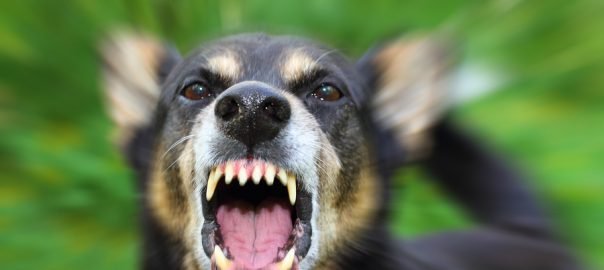 Angry or fearful dog showing aggression