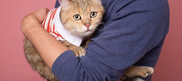 scared cat in man's arms