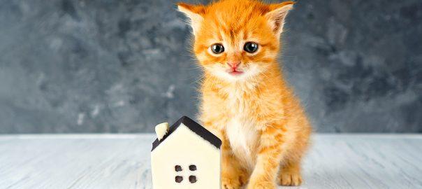 Kitten and tiny house