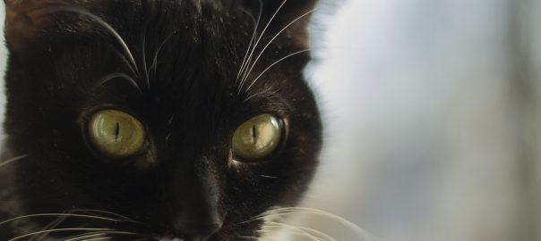Black Cat. Portrait Of A Pet. Yellow Eyes In A Cat.